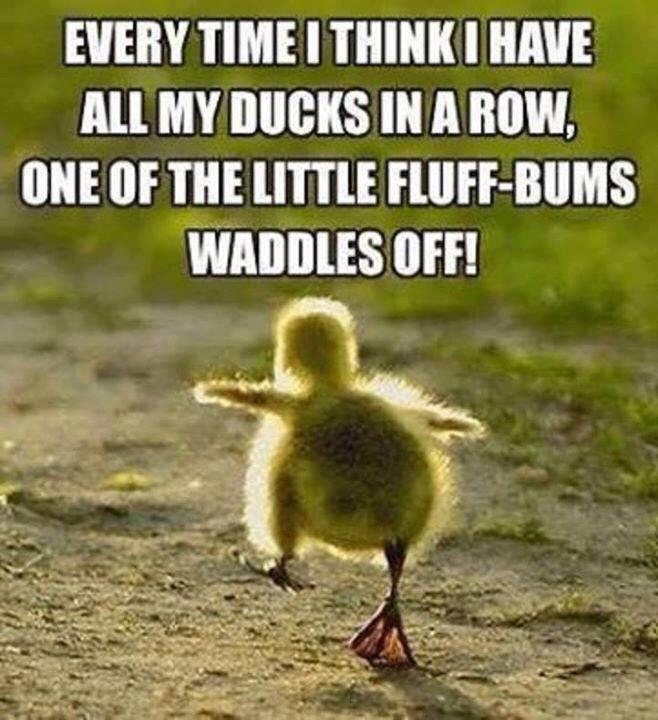 Fluff BUM's